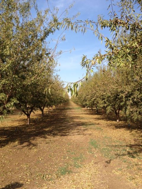 Almond orchard tour